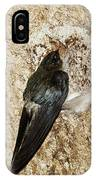 Edible-nest Swiftlet On Nest IPhone Case