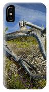 Fallen Dead Torrey Pine Trunk At Torrey Pines State Natural Reserve IPhone Case