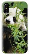 Giant Panda Ailuropoda Melanoleuca IPhone Case