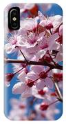 Japanese Cherry Tree IPhone Case