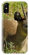 Klipspringer Antelope IPhone Case