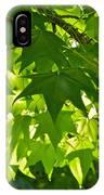 Liquidambar Tree In The Morning Sun IPhone Case