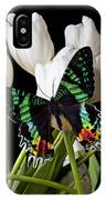 Madagascar Butterfly IPhone Case
