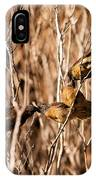 New Zealand Fantail Chicks Being Fed By Parents IPhone Case