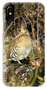 Ruffed Grouse On Drumming Log IPhone Case