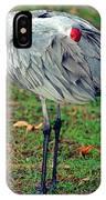 Sandhill Crane IPhone Case