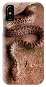 Spotted Python Antaresia Maculosa IPhone Case