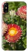 Straw Flowers Xerochrysum Bracteatum IPhone Case
