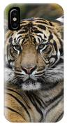 Sumatran Tiger IPhone X Case