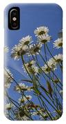 Sun Lit Daisies IPhone Case