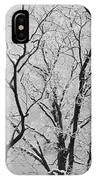 Tree Branches IPhone Case