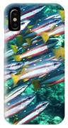 Two-spot Banded Snappers IPhone Case