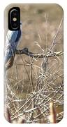 White Tailed Kite IPhone Case