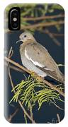 White-winged Dove IPhone Case
