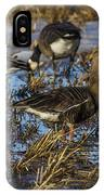 Whitefront Goose IPhone Case