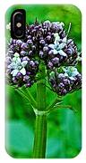 Wild Mint On Great Glacier Trail In Glacier National Park-british Columbia IPhone Case