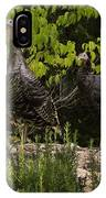 Wild Turkey Meleagris Gallopavo IPhone Case