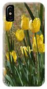 Yellow Tulips At The Arboretum IPhone Case
