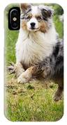 Australian Shepherd Dog IPhone Case