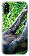 Bonobo Baby IPhone Case