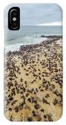 Cape Cross, Namibia, Africa - Cape Fur IPhone Case