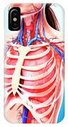 Female Cardiovascular System IPhone Case