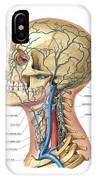 Venous System Of The Head And Neck IPhone Case