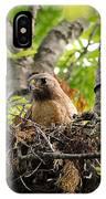 Adult Red Shouldered Hawk IPhone Case