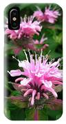 Bee Balm Named Panorama Pink IPhone Case