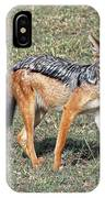 Black Backed Jackal IPhone Case