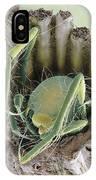 Caddisfly Larva, Sem IPhone Case