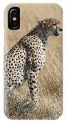 Cheetah Searching For Prey IPhone Case