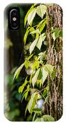 Creeper Leaves Under The Sun IPhone Case