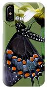 Eastern Black Swallowtail IPhone Case