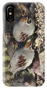 Gambel's Quail IPhone Case