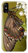 Gold Rim Swallowtail Butterfly IPhone Case