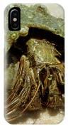 Green Striped Hermit Crab IPhone Case