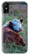 Herefords IPhone Case