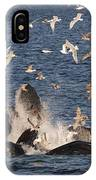Humpback Whales Feeding With Gulls IPhone Case