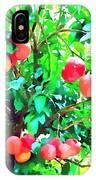 Orange Trees With Fruits On Plantation IPhone Case