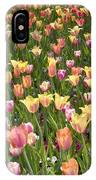 Tulips At Dallas Arboretum V92 IPhone Case