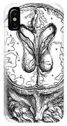 Vesalius: Brain, 1543 IPhone Case