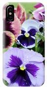 Viola 'coastal Sunrise' Flowers IPhone Case