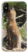Young Fox IPhone Case