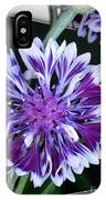 Bachelor Button From The Frosted Queen Mix IPhone Case