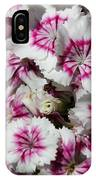 Sweet William From The Super Duplex Bluepoint Mix IPhone Case