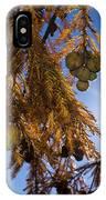 Autumn Coniferous IPhone Case