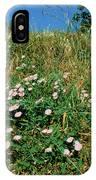 Field Bindweed (convolvulus Arvensis) IPhone Case