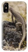 Mojave Desert Iguana IPhone Case