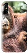 Mother And Baby Orangutan Borneo IPhone Case